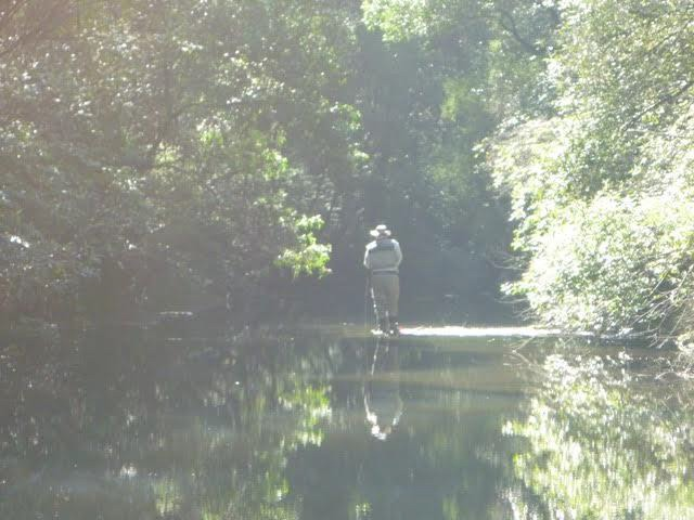 Fly fishing Southern Highlands trout stream NSW